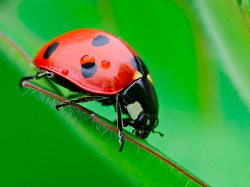 Game Xếp bọ – Bug Match